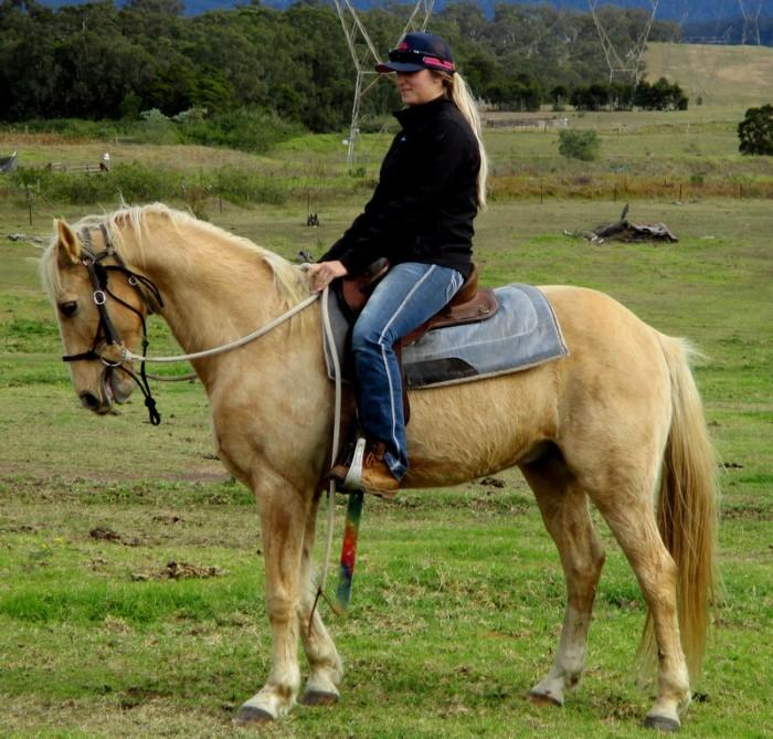 Quiet Palomino QH Gelding + VIDEO