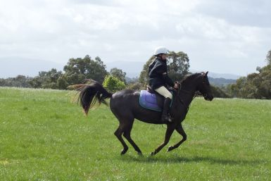 Wandin Park Cross Country Course