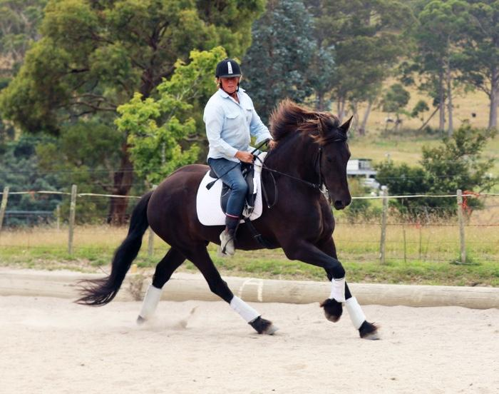 Rare Opportunity - Pure Friesian STER Gelding