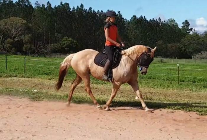 Quarter Horse Dressage Pony