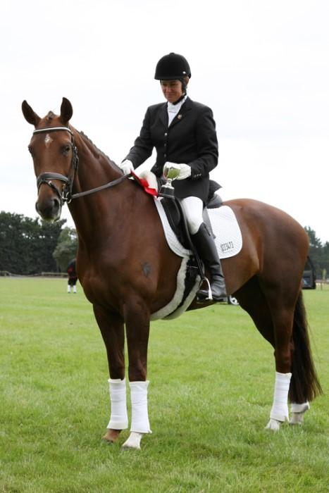 Quality Dressage Mare