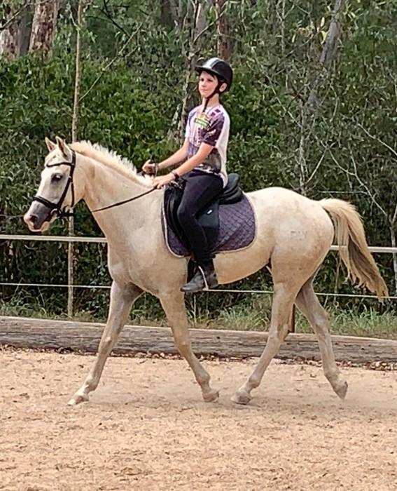 Gorgeous Pony Gelding