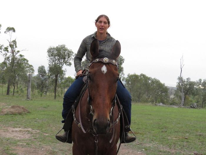 THOROUGHBRED BAY GELDING 17.2hh 6yrs