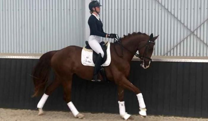 EQUITANA 2018 Auction - AEA Marco Polo (Dressage)