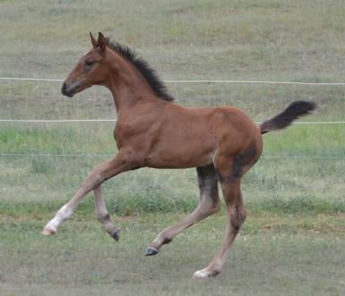 Courtland's Jana by Casanova