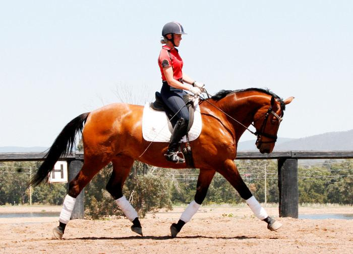 THIS MAGNIFICENT MARE COULD BE YOURS