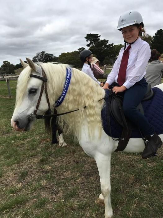 Pony Club Mount Welsh Mountain Pony 12.2hh 12y.o.