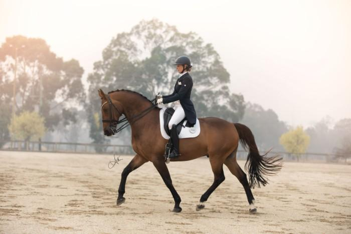 Advanced Dressage Schoolmaster