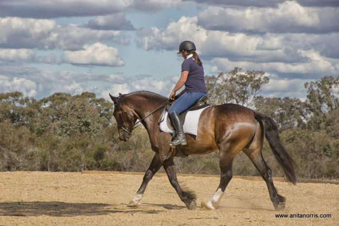 Once in a lifetime Allrounder Warmblood x Clyde