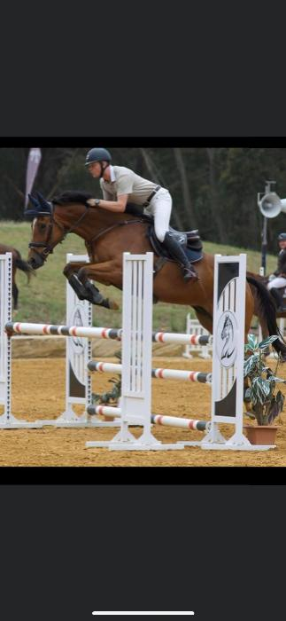 Talented Juniors/Amatuers Showjumper