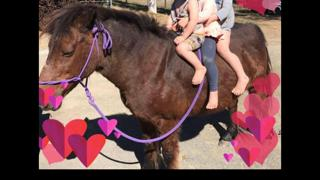 Safe and reliable lead line welsh pony
