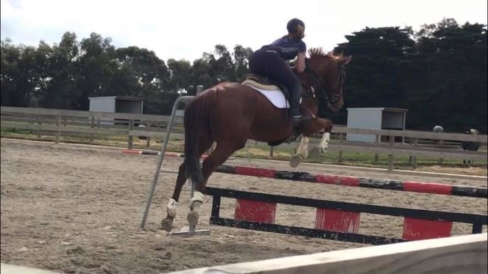 Beautiful Mare - Selling out of work