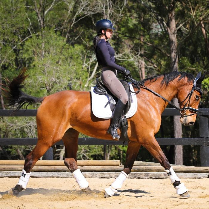 Super Safe Warmblood Mare