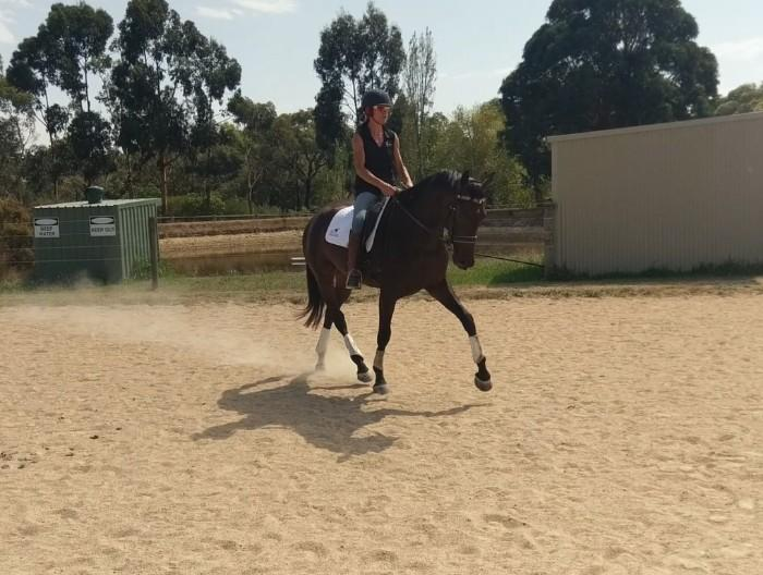 Elegant and Talented Gelding for sale