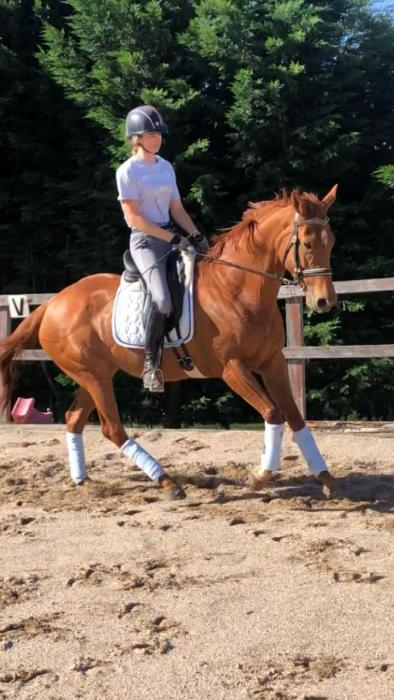 Super Quiet Thoroughbred Mare
