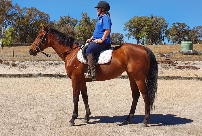 Beautiful mare seeks loving new home