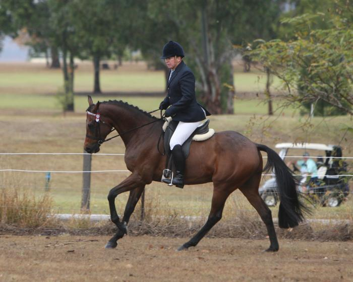 Show Horse Riding Pony x TB Small Hack