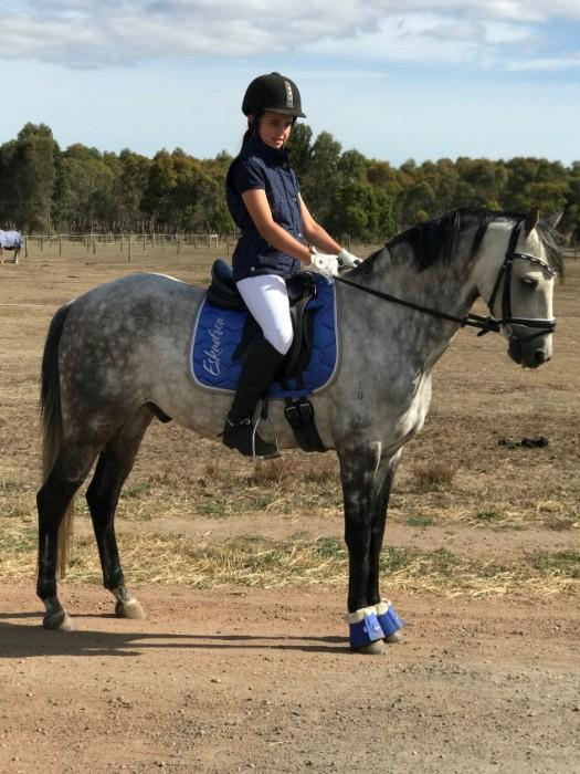 Outstanding Allrounder Pony