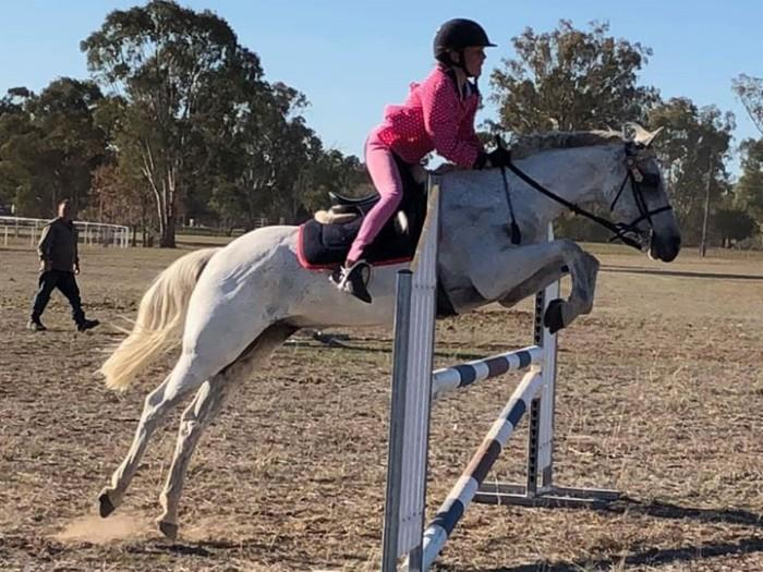 Welsh Riding Pony / Child Eventing prospect