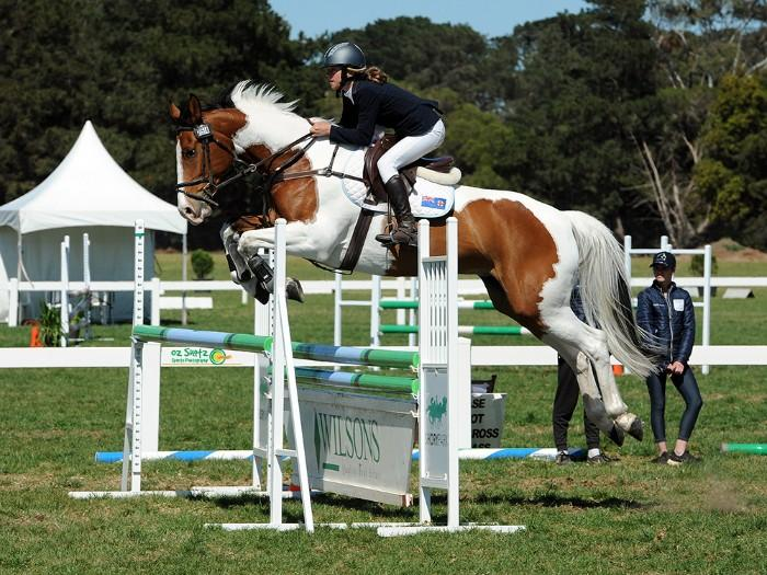 Interschool / Pony Club Showjumper