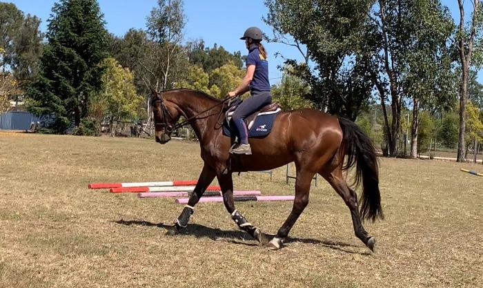 Flashy Royal hit gelding