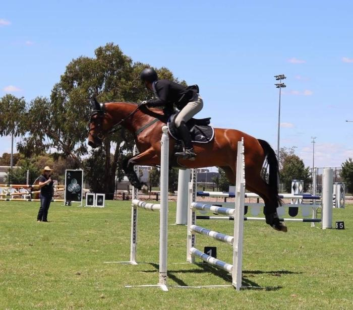 WB Showjumping Mare Caracas Young Rider Amateur