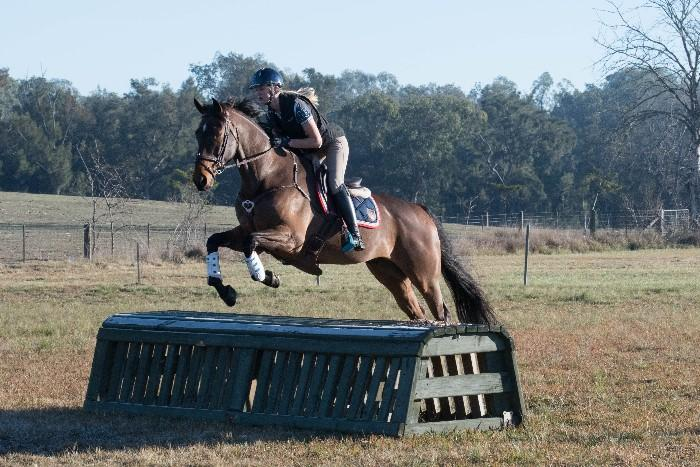 Eventing Thoroughbred