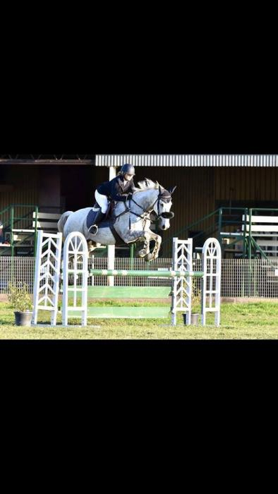 Stunning Grey Showjumping and Dressage gelding