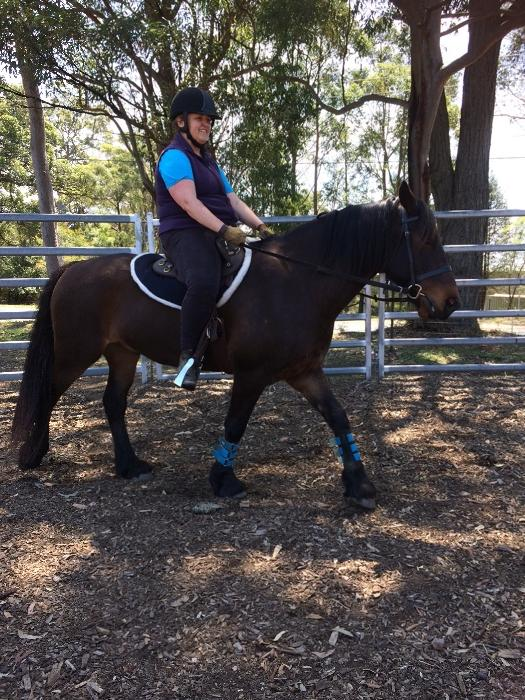 LEASED: Welsh Cob Section D Gelding