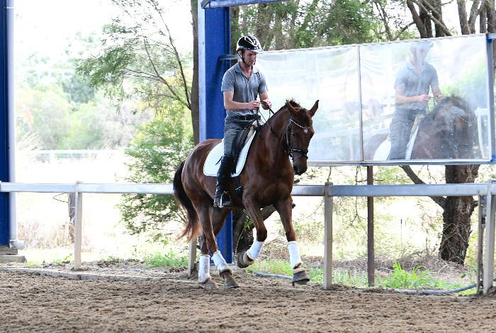 Dressage, Adult Riding Club & Teen Mount Prospect