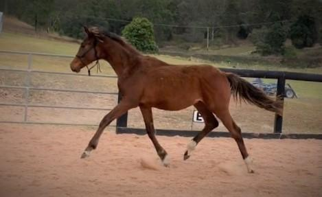 Flashy Ampere colt