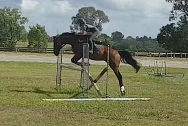 EVENTING WINNER!!       Flashy 16.2hh 6yo gelding