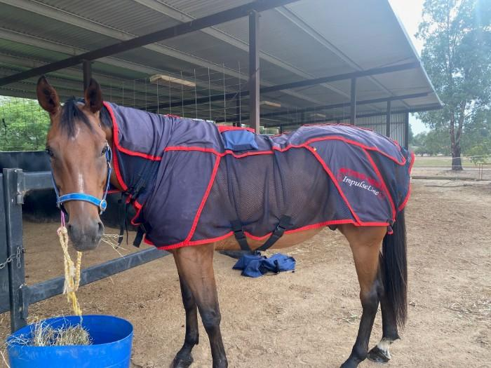 Activomed Combi Pro Rug + PEMF Boots