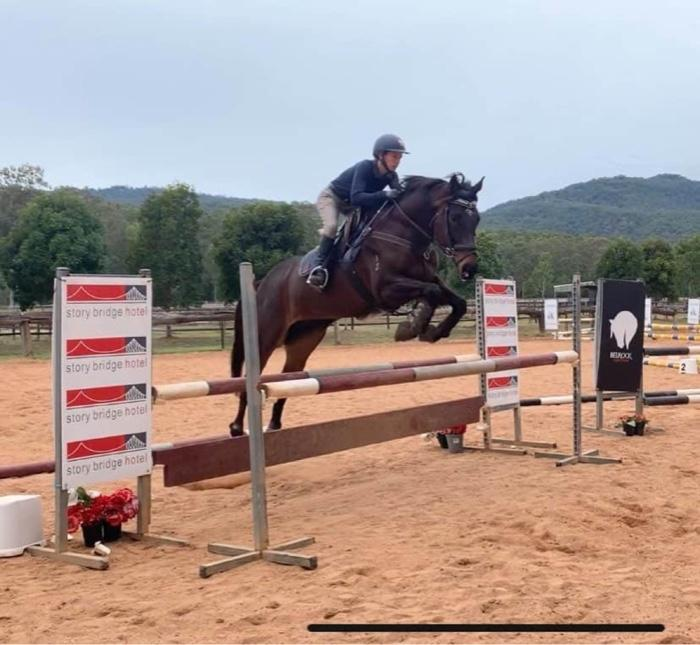 Flashy and competitive TB gelding