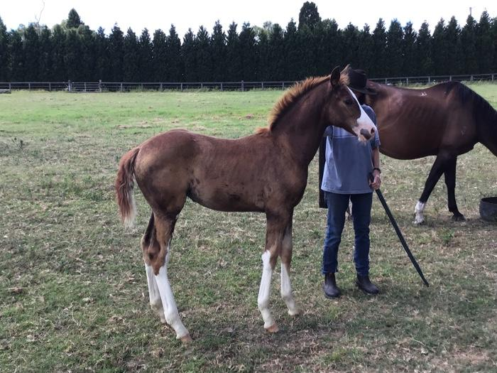 So pretty Belissimo M/Olympic Ferro filly