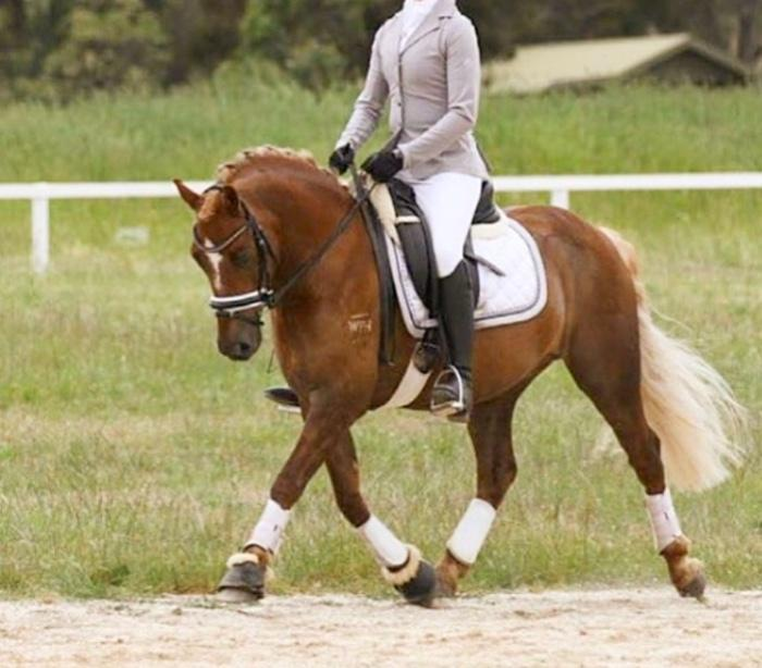 Dressage pony superstar