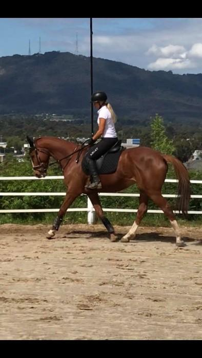 6yr old OTTB. Red (Heart of Baroque)