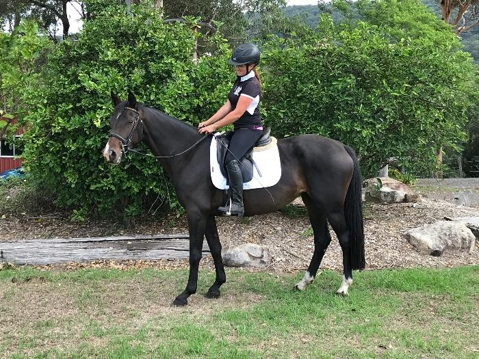 Stunning Warmblood Mare -Price drastically reduced