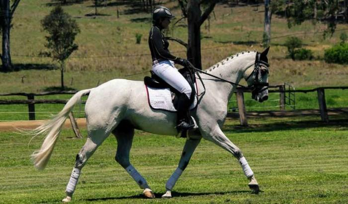 Equitana 2018 Auction - Belcam Agastini (Dressage)