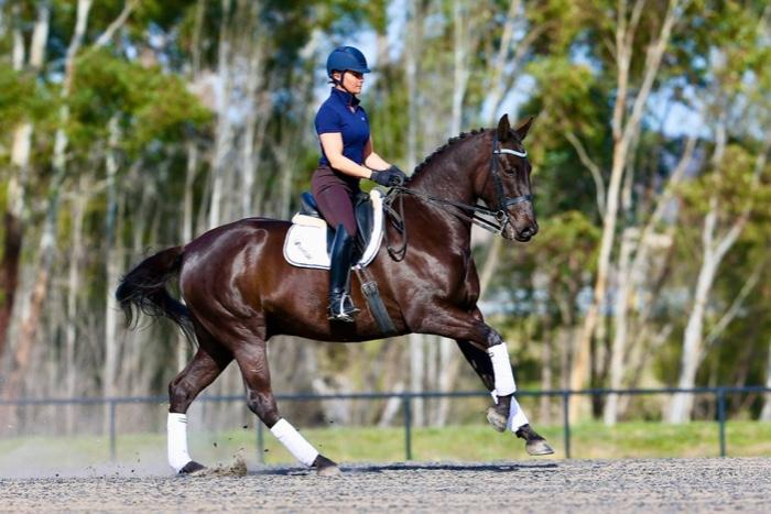 The Perfect Allrounder with FEI Dressage Potential
