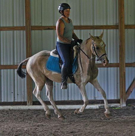 **THIS AD IS A SCAM* Lovely 6yo Bashkir Curly mare