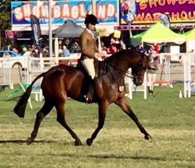 Alkyra Acrobat -  Royal Show Champion, 2 x Runner up HOTY and National Interschools Champion