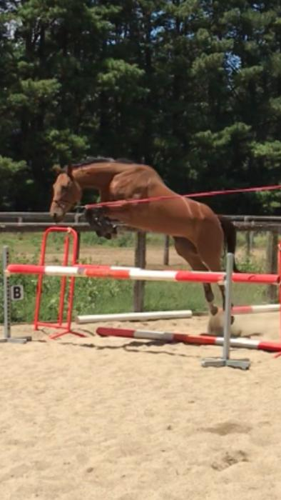 Incredible jumping mare