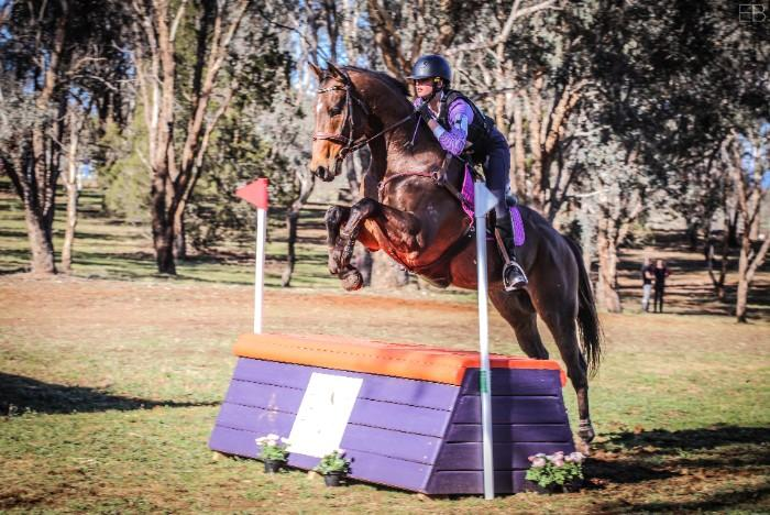No Return (Reggie) - 16.3hh 8yr Ottb