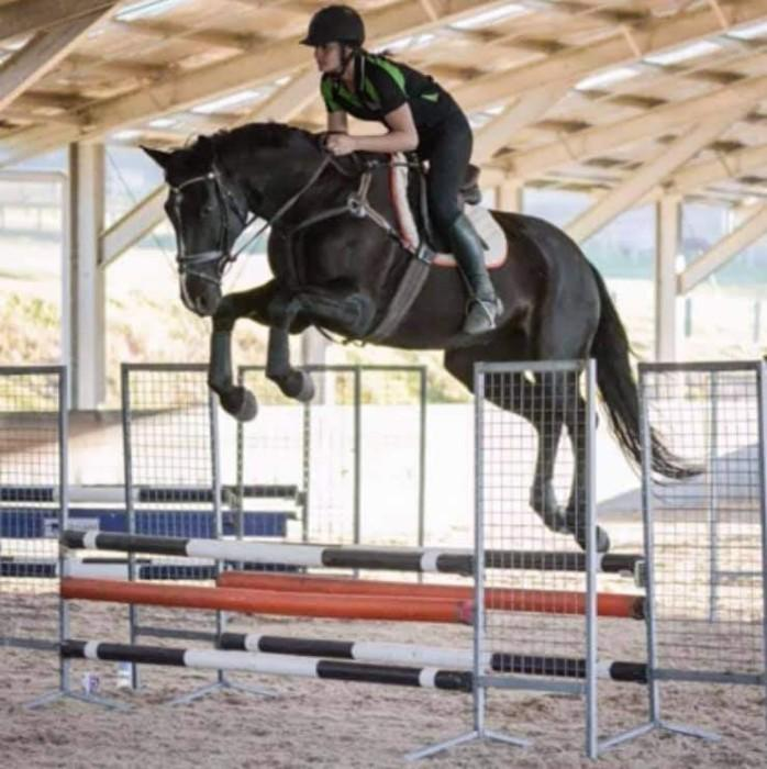 Black warmblood gelding. Suitable for show jumping