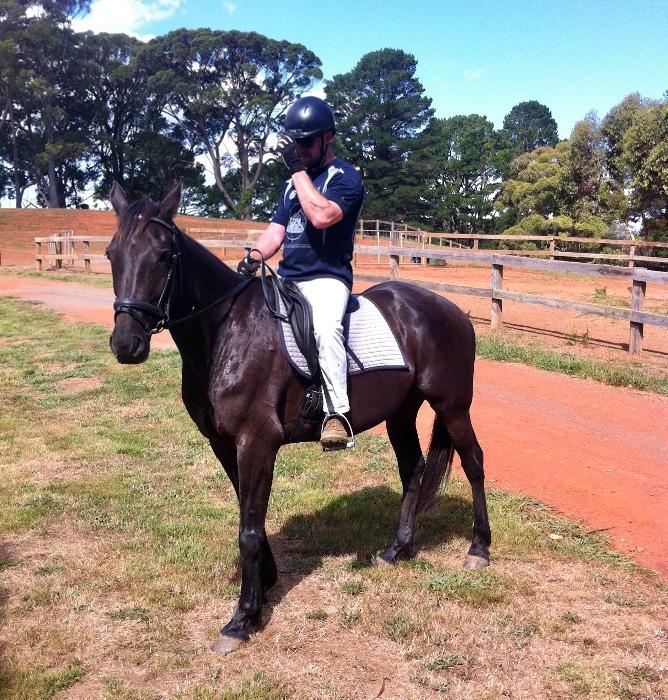 Handsome Black Gelding 15.3hh Standardbred