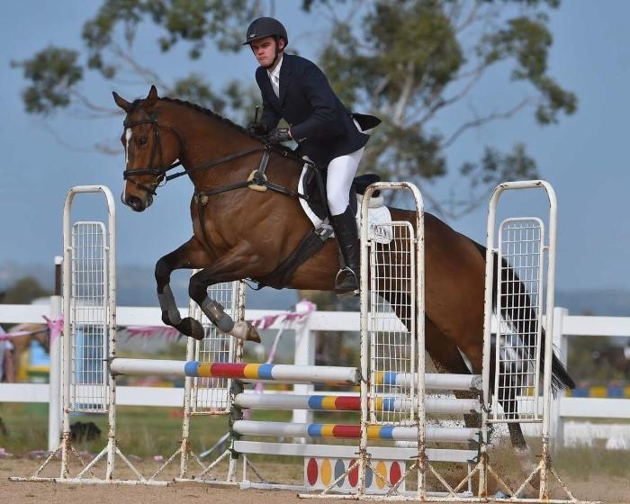 Scopey jumper/competitive eventer