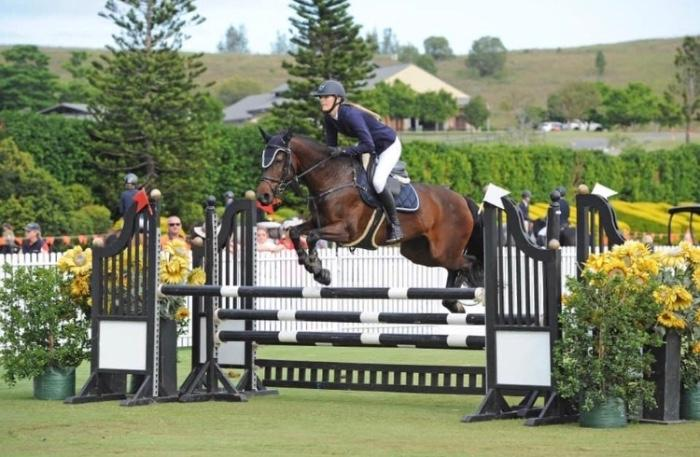 Talented WBxTB Showjumping Mare