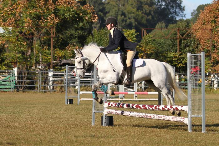 PRICE REDUCED Super Connemara Pony Clubber/Jumper