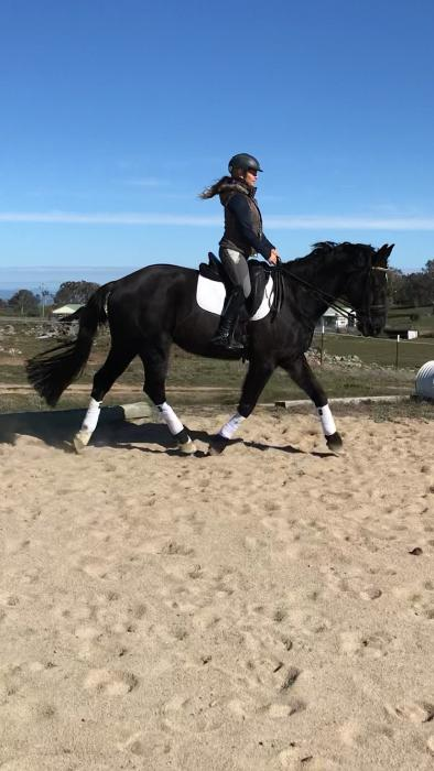 Advanced/PSG schoolmaster!!